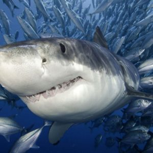 download shark wallpapers | shark wallpapers – Part 5