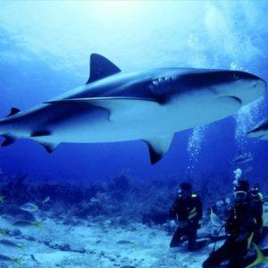 download Wallpapers For > Shark Wallpaper Hd 3d