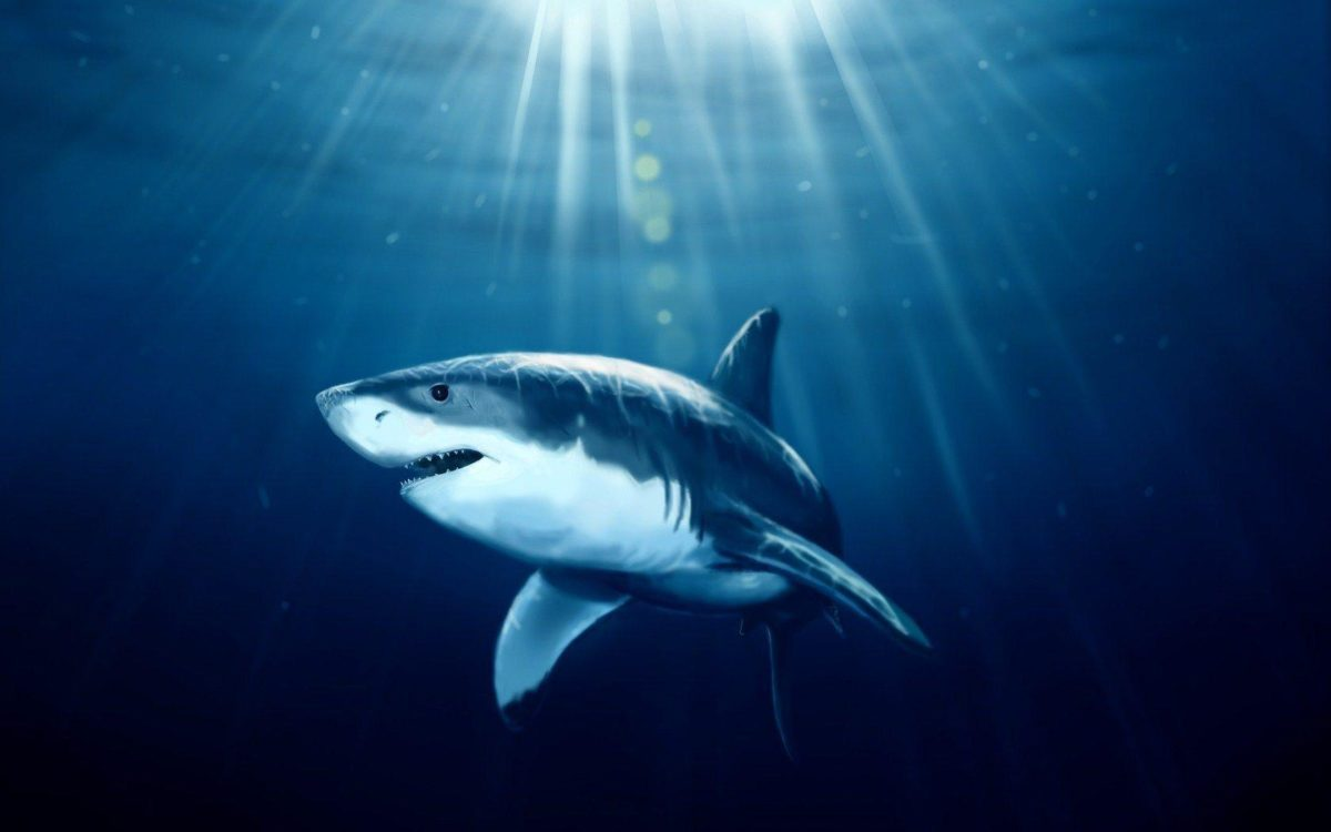 Shark Fish Underwater Art HD Wallpaper – ZoomWalls