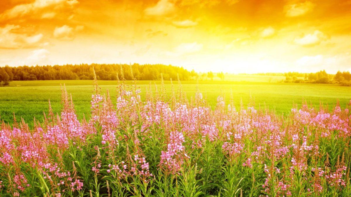 Summer Flowers In Season Wallpaper Background 1 HD Wallpapers …