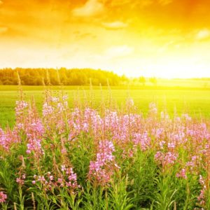 download Summer Flowers Wallpapers | HD Wallpapers Early