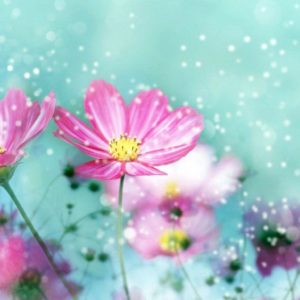 download Hd Flowers Colorful Background 1 HD Wallpapers