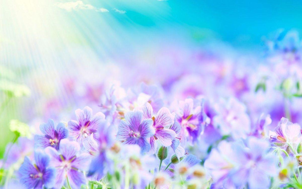 Top Flowers Wallpapers – HD Wallpapers Inn