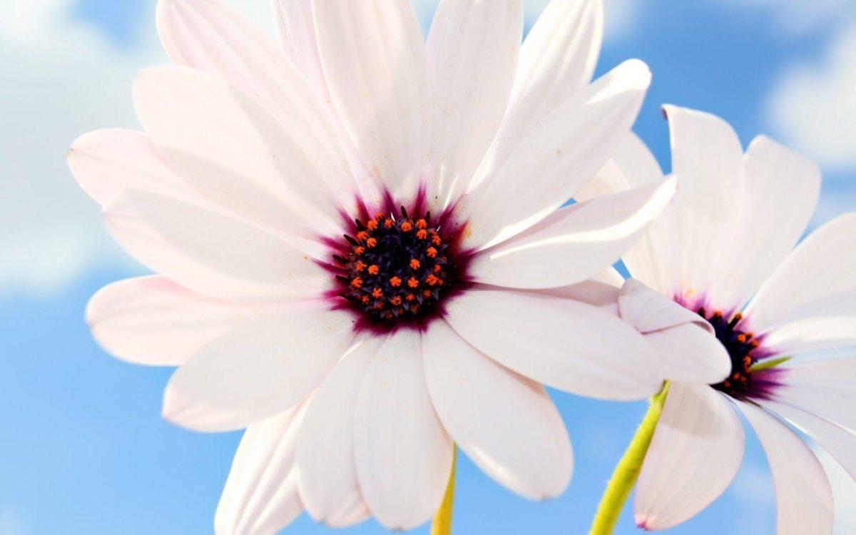 Hd Wallpaper Flowers | Black Wallpapers For Desktop