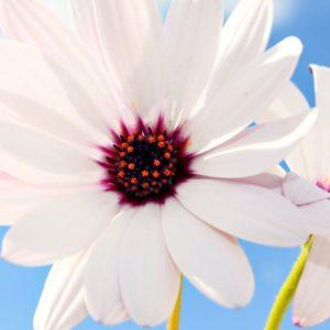 download Hd Wallpaper Flowers   Black Wallpapers For Desktop