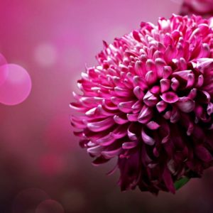 download Page 1756   Flower wallpapers , Flowers wallpapers hd , Flowers …