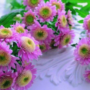 download Free 3D Flower Wallpapers HD Galleries For Desktop   Cool Wallpaper