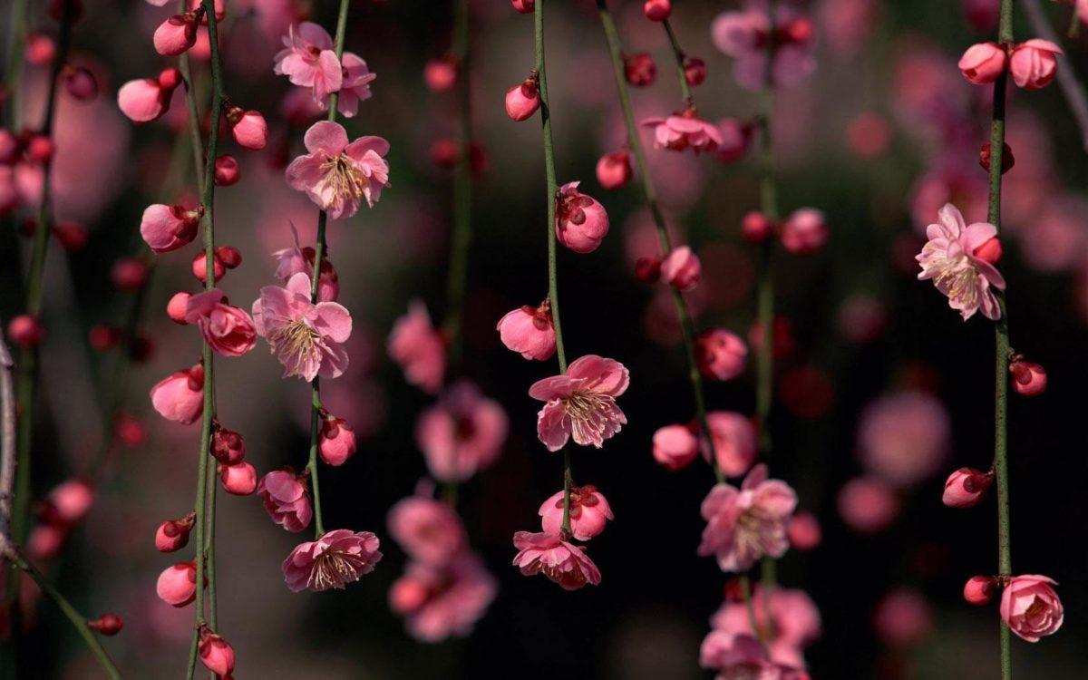 Spring Flowers HD Wallpapers – HD Wallpapers Inn