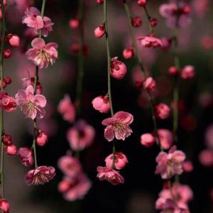 download Spring Flowers HD Wallpapers – HD Wallpapers Inn