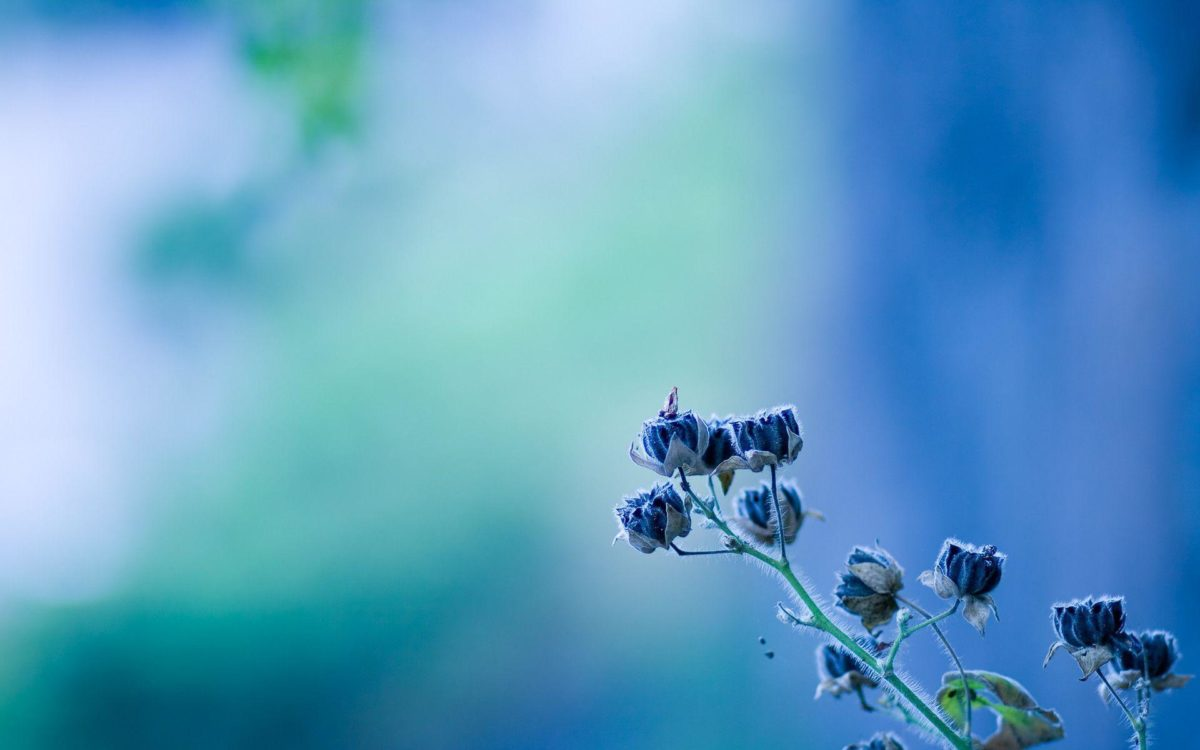 Wallpapers Tagged With FLOWERS | FLOWERS HD Wallpapers | Page 3