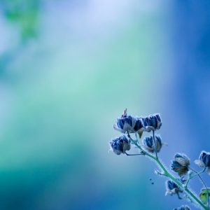download Wallpapers Tagged With FLOWERS | FLOWERS HD Wallpapers | Page 3
