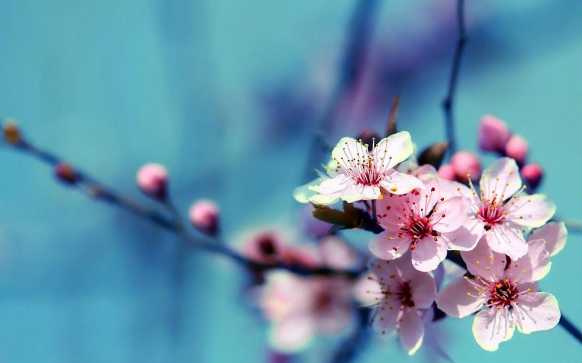 Flowers Wallpapers – HD Wallpapers Inn