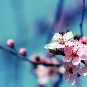 download Flowers Wallpapers – HD Wallpapers Inn