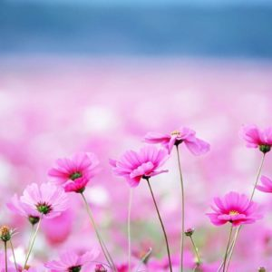 download Flowers Wallpapers | Free Desk Wallpapers
