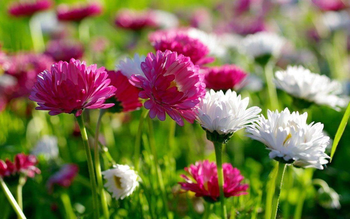 Flowers HD Wallpapers Download | fbpapa.