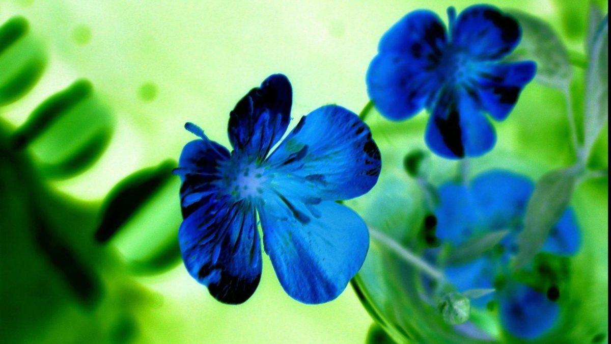 Flowers Blue HD Wallpapers – HD Wallpapers Inn