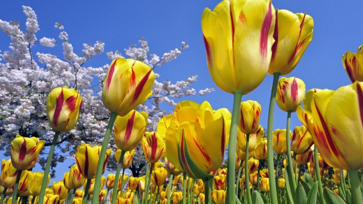 Desktop flower backgrounds hd wallpaper
