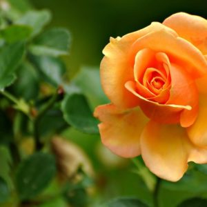 download Flower-
