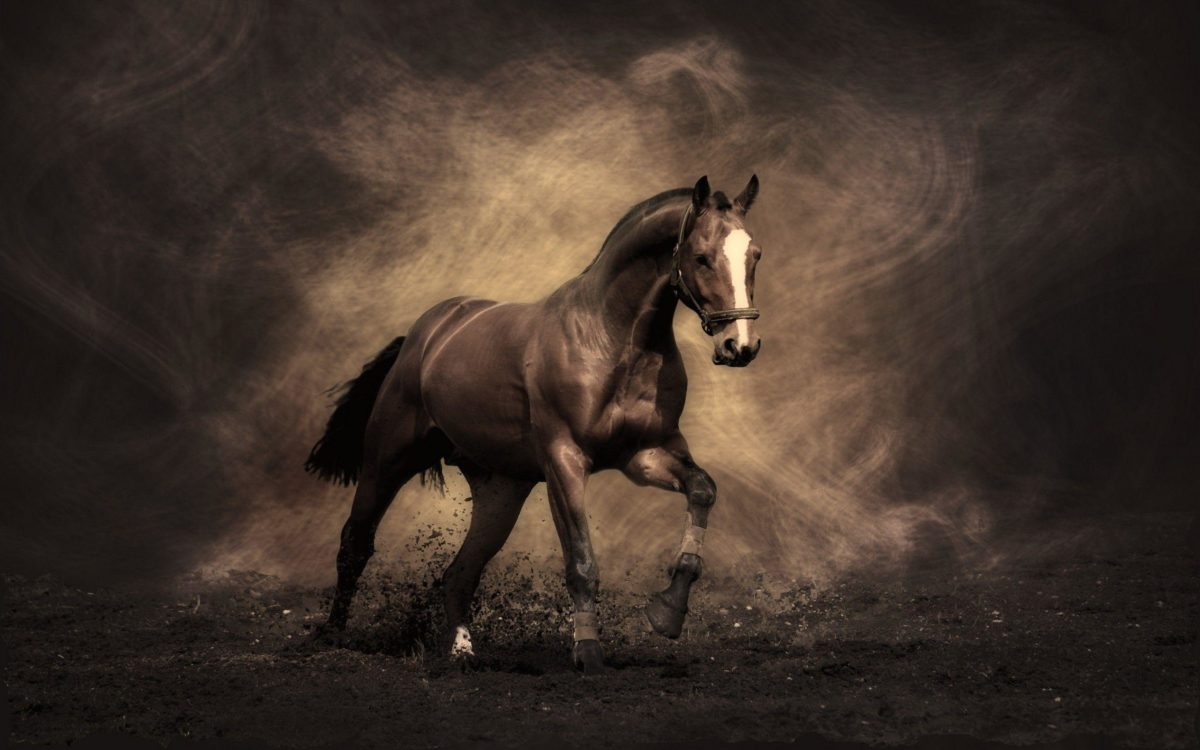 Horse Wallpapers – Full HD wallpaper search