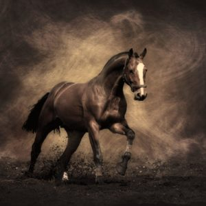 download Horse Wallpapers – Full HD wallpaper search