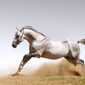 download A selection of 10 Images of Horses in HD quality