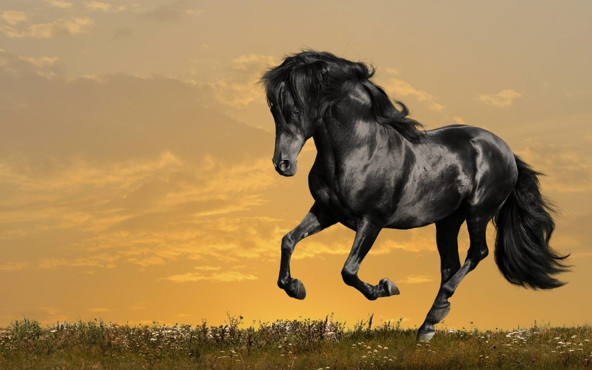 Horse wallpaper – Black Beauty Wallpapers – HD Wallpapers 95774