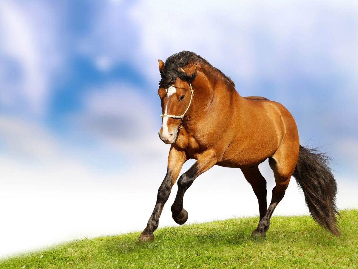 Beautiful-Horse-Wallpaper-10.jpg