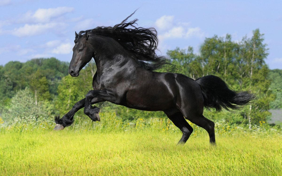 Horse Computer Wallpapers, Desktop Backgrounds 2560×1600 Id: 343460