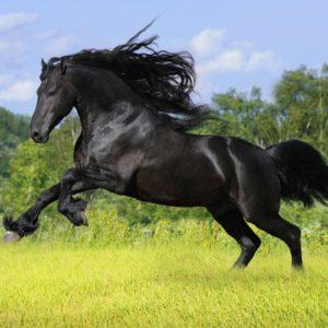 download Horse Computer Wallpapers, Desktop Backgrounds 2560×1600 Id: 343460