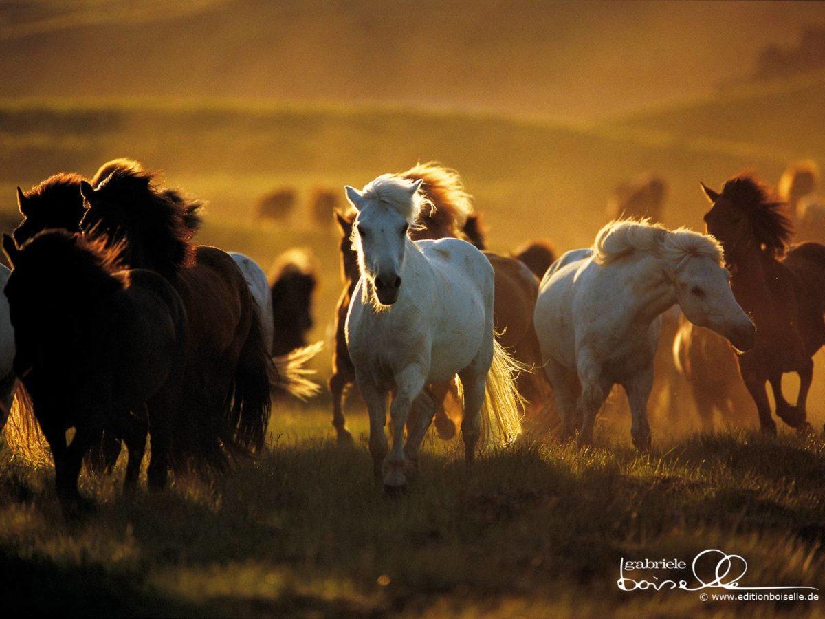 Horse Wallpaper – Horses Wallpaper (1899058) – Fanpop