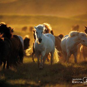 download Horse Wallpaper – Horses Wallpaper (1899058) – Fanpop