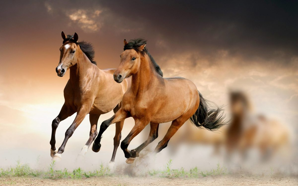 Running Horse HD Wallpaper Download | High Quality Wallpaper …