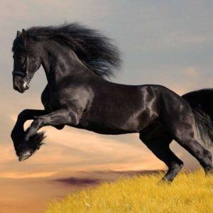 download Black Horse HD Wallpapers | Download Black Horse Images | Cool …
