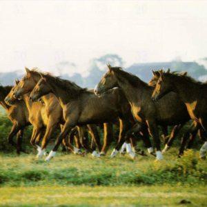 download horse wallpaper – Horses Wallpaper (15704768) – Fanpop