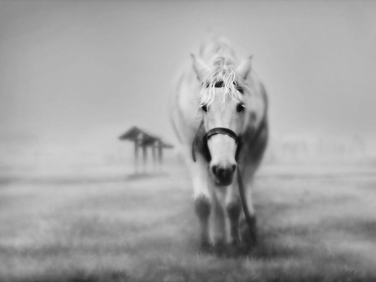 horse wallpaper – Horses Wallpaper (15704764) – Fanpop