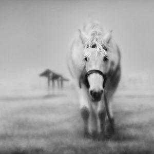 download horse wallpaper – Horses Wallpaper (15704764) – Fanpop
