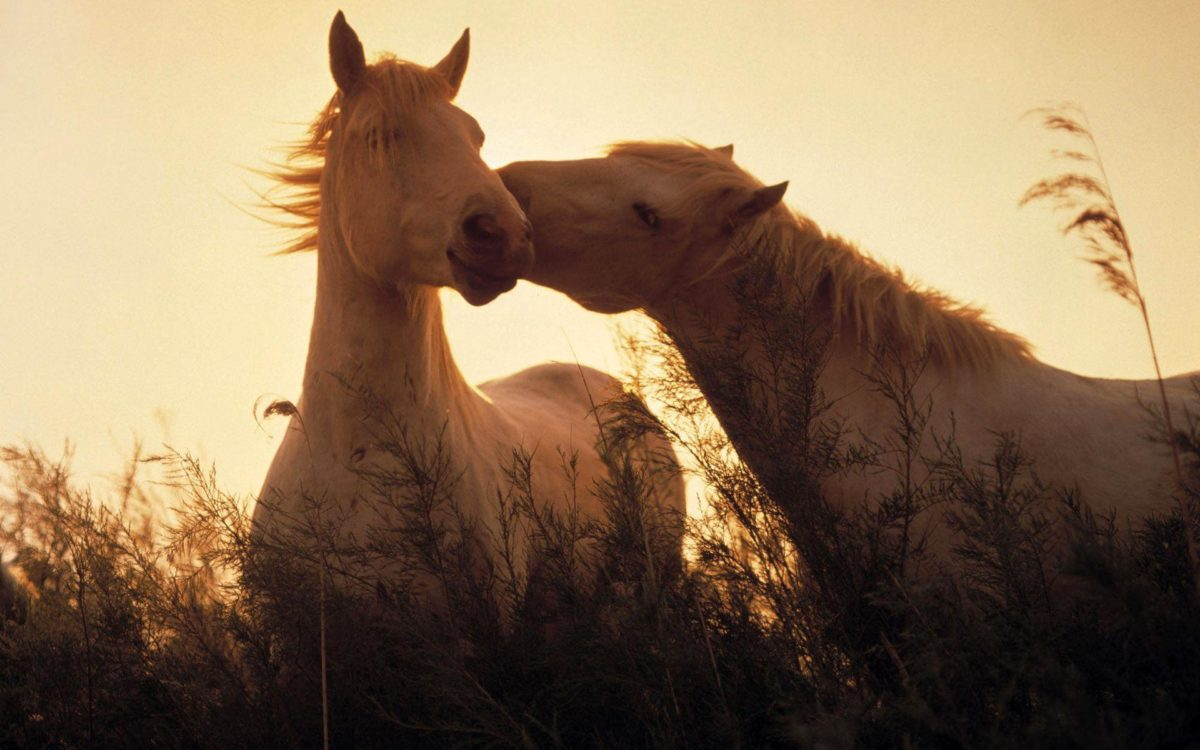 1010 Horse Wallpapers | Horse Backgrounds Page 4