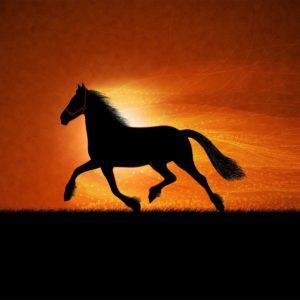 download More horse wallpapers! – Horses Wallpaper (15705255) – Fanpop