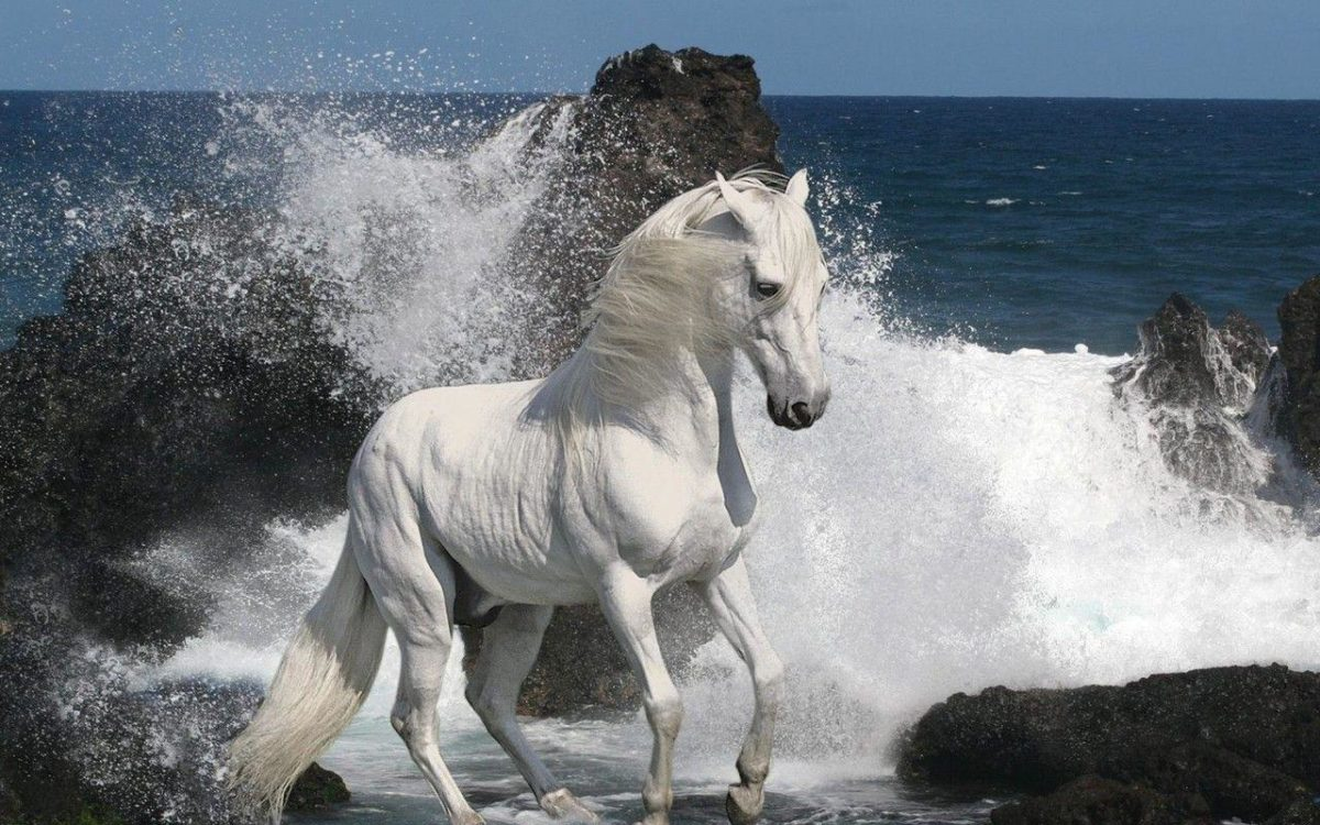 White Horse Wallpapers | White Horse Desktop Wallpapers | Cool …