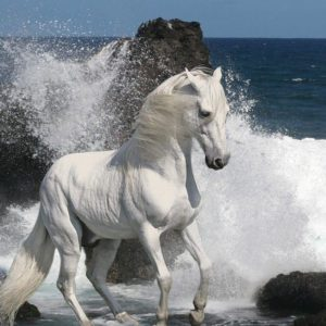 download White Horse Wallpapers | White Horse Desktop Wallpapers | Cool …