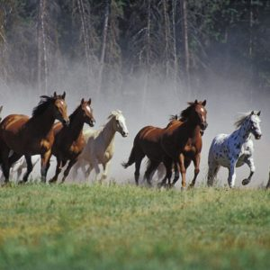 download Animal Horse Image HD Wallpaper #931 Wallpaper computer | best …