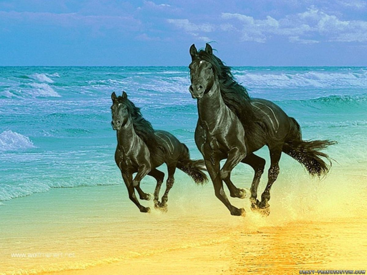More horse wallpapers! – Horses Wallpaper (15705243) – Fanpop