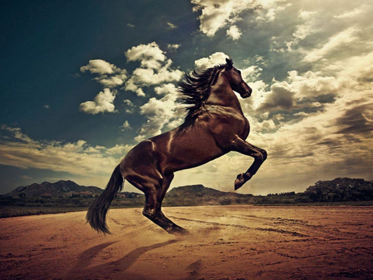 Horse Wallpapers|HD Horses Wallpapers | Beautiful Cool Wallpapers