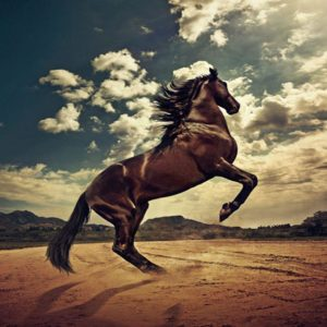 download Horse Wallpapers|HD Horses Wallpapers | Beautiful Cool Wallpapers
