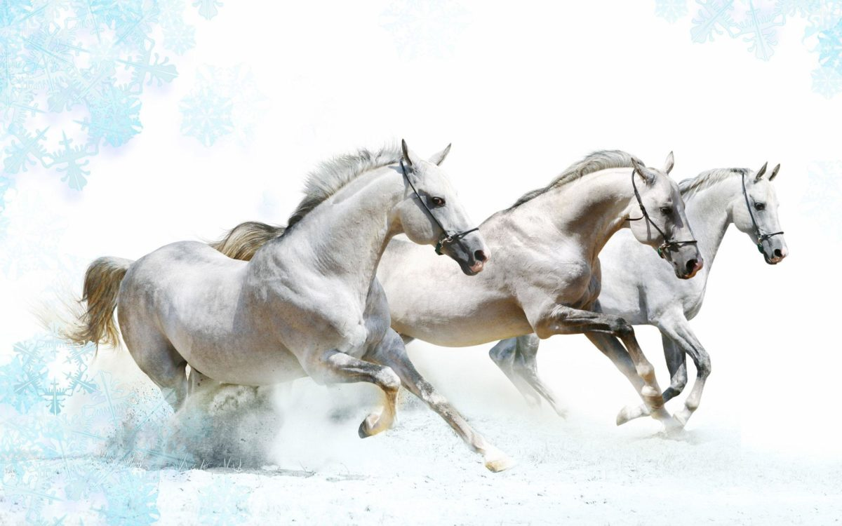 Wallpapers For > White Horse Wallpaper