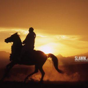download Slawik horse wallpapers – Horses Wallpaper (6070992) – Fanpop