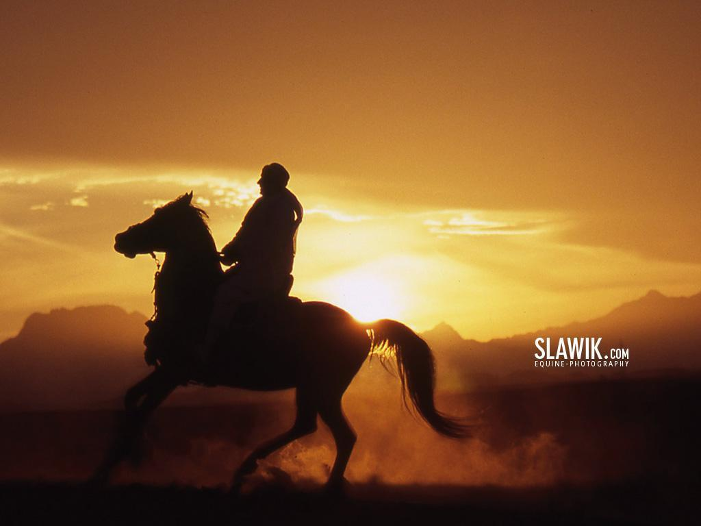 Slawik horse wallpapers – Horses Wallpaper (6070992) – Fanpop