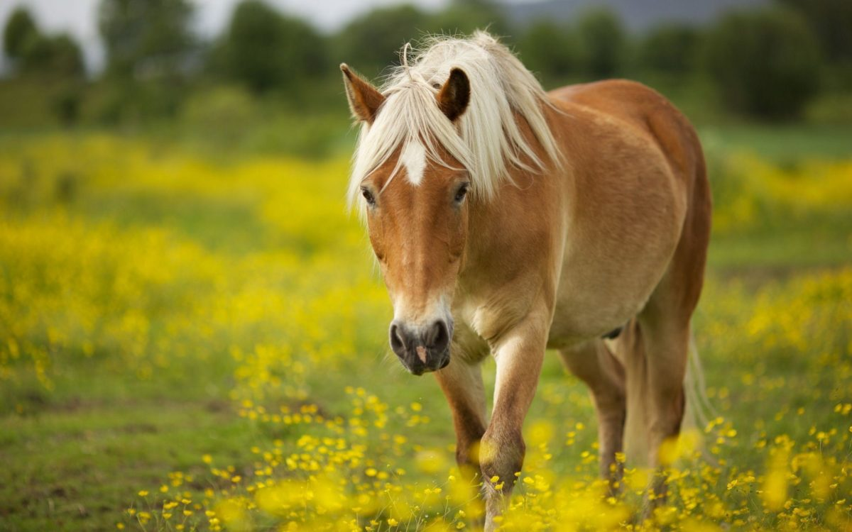 Horse Wallpaper Android Phones #10302 Wallpaper | Cool …