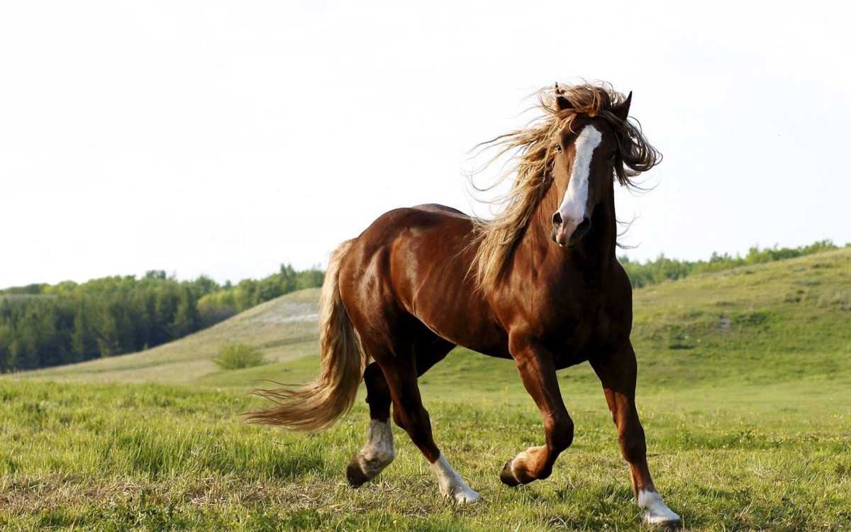 Horse Wallpaper Widescreen #14200 – Ehiyo.