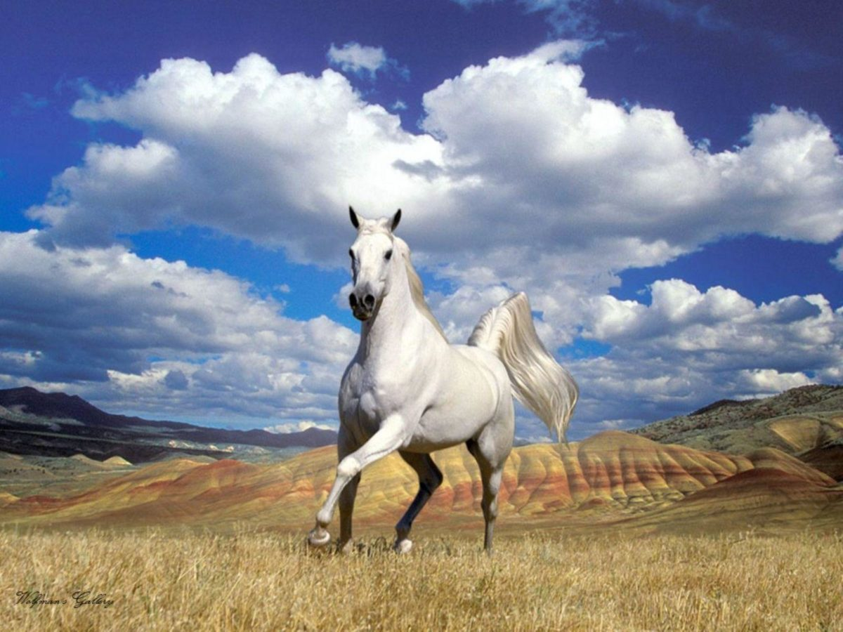 Appaloosa Horse Wallpapers | Pictures of Appaloosa Horses | Cool …
